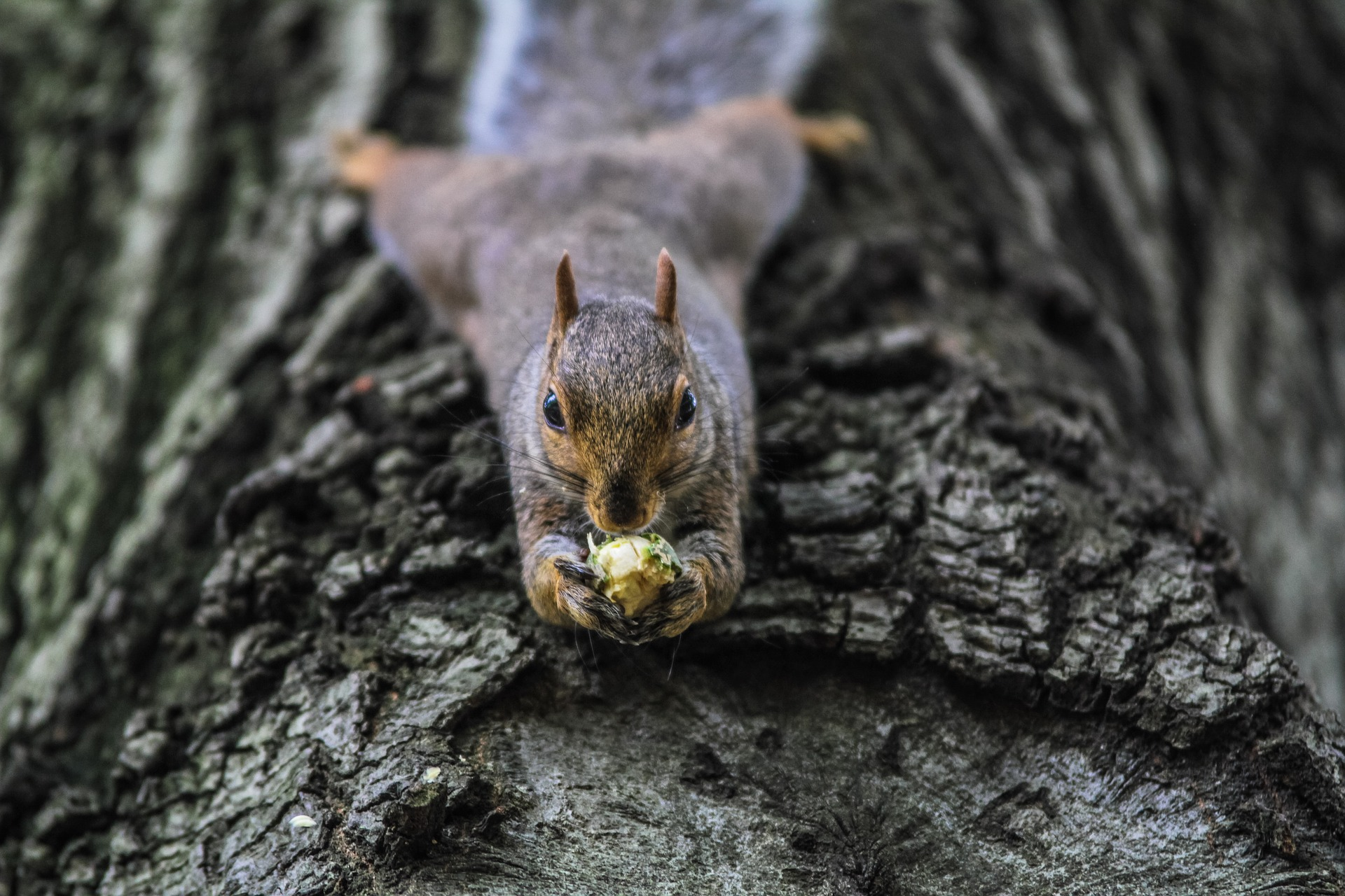 How to Think Like a Squirrel and Meet Your Sales Quota